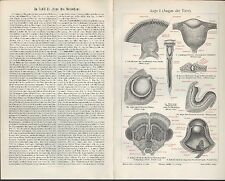 Lithografie 1905: Augen der Tiere. Auge des Menschen. Augenuntersuchung. Organe