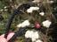 925-Plata-Africano-Madagascar-Amonita-Fossil-Colgante-Collar-Borgona-Color miniatura 6