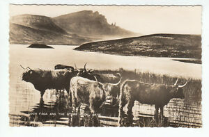 Highland-Cattle-Loch-Fada-Storr-Rock-Isle-Of-Skye1931-Real-Photograph-Inverness