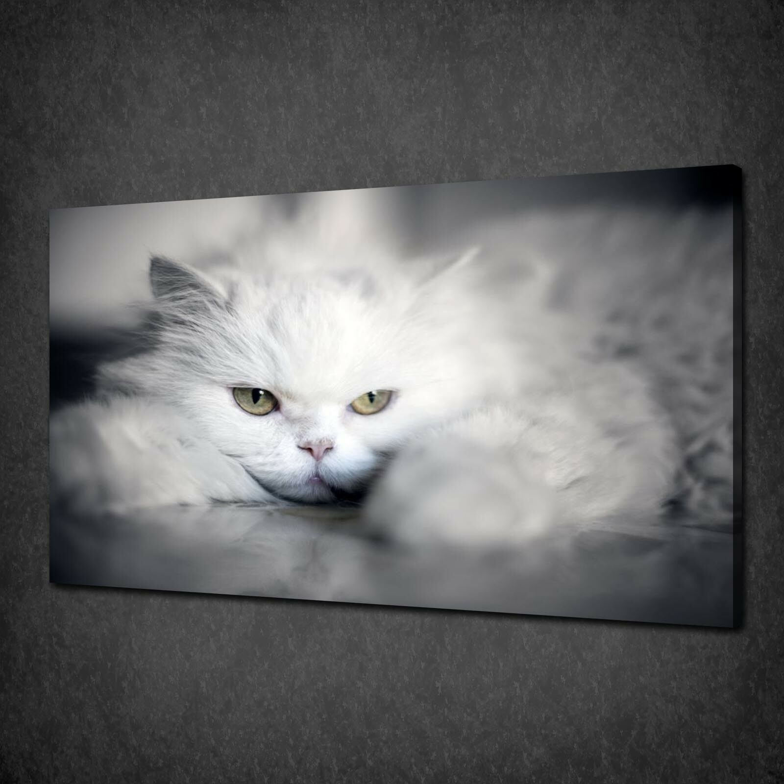 SLEEPY Weiß CAT CANVAS PICTURE PRINT WALL HANGING ART HOME DECOR FREE DELIVERY