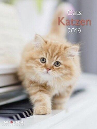 Katzen 2019 Posterkalender (Kalender) NEU