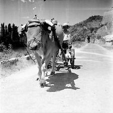 LUZECH c. 1946 - Paysan Boeuf Coiffé  Lot - Négatif 6 x 6 - N6 OCC15