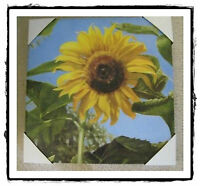 Southern Living At Home Wh Beautiful Blooms Canvas Wall Sunflower Print