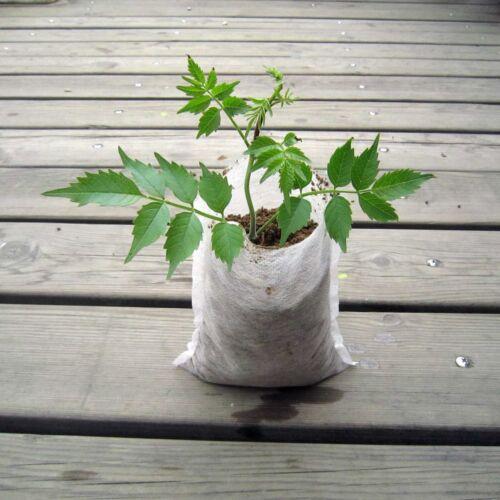 500pcs Seed Germinate Plant Clone Grow Pot Fabrics Bag Breathable #Mv72 QL