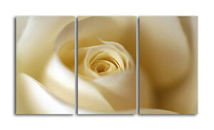 CREAM ROSE CANVAS ART FLOWER PRINT FLORAL WALL ART FLO11