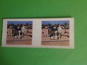 VINTAGE WEETABIX 3D VIEW CARD WORKING DOG CARDS 23 PAPILLONS - Basingstoke, United Kingdom - VINTAGE WEETABIX 3D VIEW CARD WORKING DOG CARDS 23 PAPILLONS - Basingstoke, United Kingdom