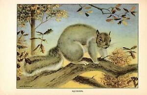 "1926 Vintage ANIMALS /""SQUIRREL/"" GORGEOUS COLOR Art Print Plate Lithograph"