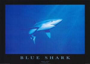 POSTER-ANIMALS-FISH-amp-MARINE-BLUE-SHARK-FREE-SHIPPING-PE1032-RW15-i