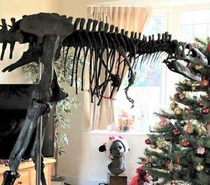 TYRANNOSAURUS-REX-Dinosaur-MOUNTED-T-REX-Skeleton-Fossil-Replica-LIFE-SIZE-BABY