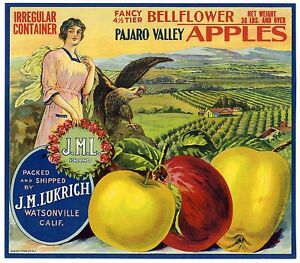 Watsonville CA West Valencia Apple Fruit Crate Label Art Print Belly dancer
