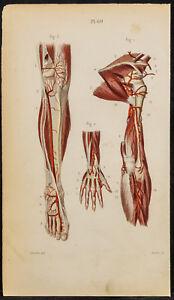 1846-Planche-anatomie-Angiologie-Arteres-de-la-jambe-bras-pied-main