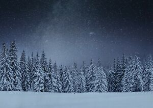 A1-Winter-Woods-At-Night-Poster-Art-Print-60-X-90cm-180gsm-Forest-Gift-16812