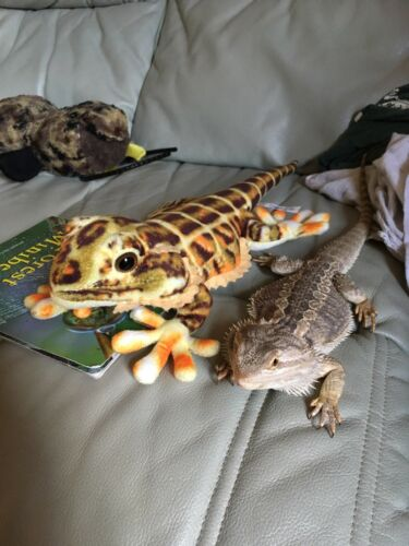 Blue Bug Plush Bearded Dragon Reptile Toy for Children and Adults Birthday Gift