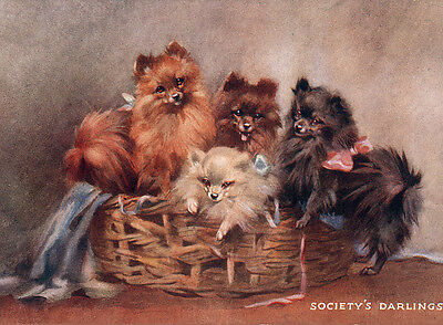 POMERANIAN CHARMING DOG GREETINGS NOTE CARD FOUR BEAUTIFUL DOGS IN BASKET