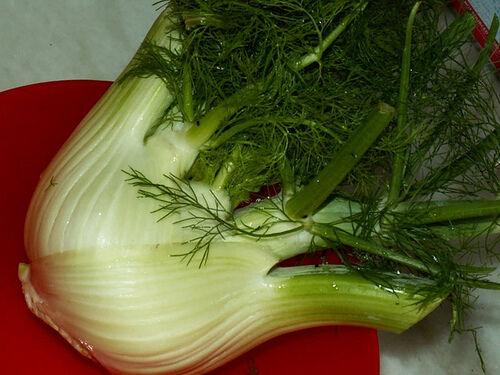 ERBA-fennel-FIRENZE-Foeniculum vulgare 600 semi-Organic