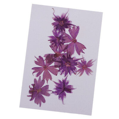 10pcs Pressed Real Purple Flower Dried Flowers for Jewelry Making Crafts