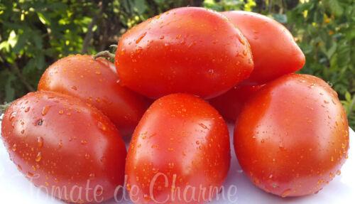 heirloom 10 graines de tomate bio rare KENIGSBERG excellente très productive