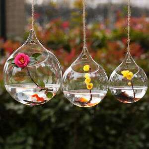 blown glass hanging vase hydroponic terrarium succulents planter flower vase hom ebay. Black Bedroom Furniture Sets. Home Design Ideas