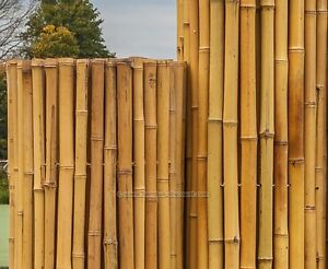 Bambusmatten Bali Heavy 100 X 250cm Sichtschutzmatten