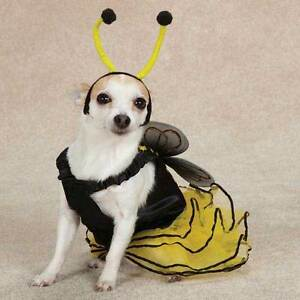 d54eb151082 Casual Canine BEE MINE Bumble Bee Dog Halloween Costume XS S M L XL ...