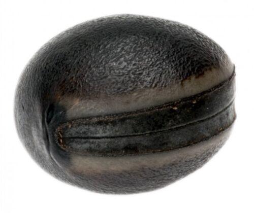 NaDeco® frijol oscuro OLHO de BOIMucuna Pruriens Grano de mar