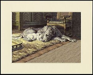 IRISH WOLFHOUND LOVELY DOG PRINT MOUNTED READY TO FRAME