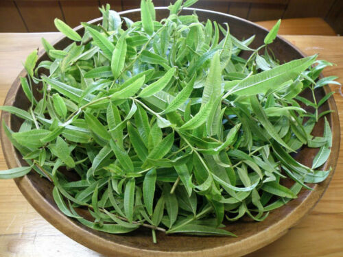 100Pc Verbena Flowers Seeds Rare Medicinal Herb Plants Decoration in Home Garden