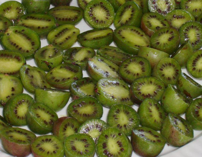 Egrow 100Pcs//Bag Mini Kiwi Berry Seeds Miniature Kiwi Berry Hardy Actinidia Argu