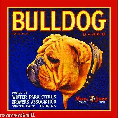 Winter Park Florida Bulldog Dog #1 Orange Citrus Fruit Crate Label Art Print