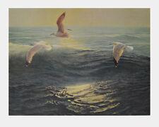 Karl Ewald Olszewski Kunstdruck Poster hochwertiger Lichtdruck Möven 69x86cm