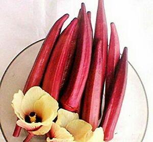 Organic Red Burgundy Okra Seeds 50+ Seeds
