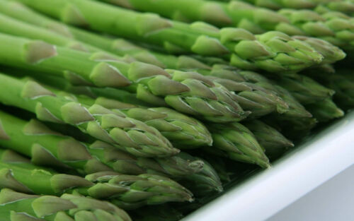 10  Fresh Seeds Asparagus Officinalis Asparagus