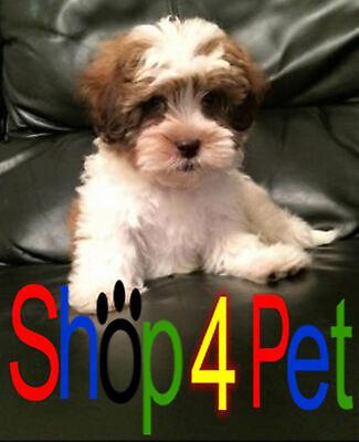 Shop4Pet