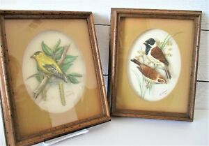 2-Vintage-Ornithology-1958-John-Murr-amp-PH-Gommer-Framed-Bird-Prints-Germany-VHTF