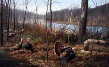 "David Maass ""Rivers Edge Courtship Wild Turkeys Print 24.75"" x 16.75"""