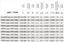 Ventilador Axial Industriegebläse de Metal Pared 8200m ³H