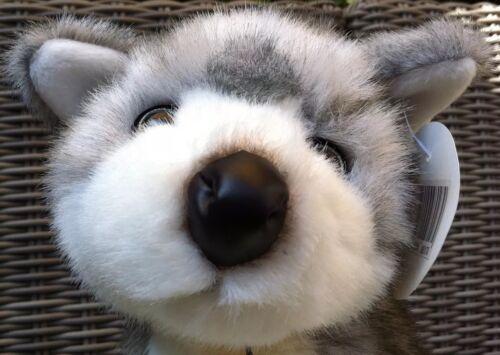 Plüschtier Husky