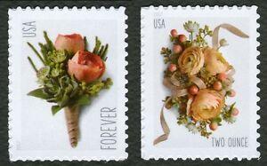 #5199-5200 Celebración Flores, Individuales, Nuevo Cualquier 5=