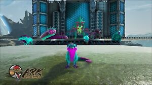 ark-survival-evolved-pc-pve-8-Cotton-Candy-Package