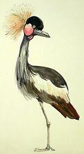 HEINRICH LORENZEN - Exotischer Vogel - Aquarell um 1950