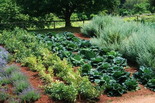 25 HEIRLOOM GARDEN VEGETABLE SEEDS NON-GMO  ORGANIC SURVIVAL SEED BANK VAULT SET
