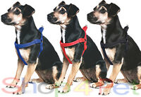 ANCOL Nylon Padded Dog / Puppy Harness with Night Relective Stitching - 5 sizes