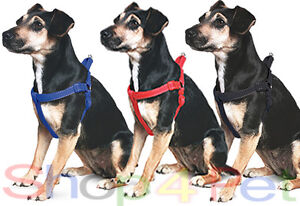 Dog-Puppy-Harness-ANCOL-Nylon-Padded-with-Night-ReFlective-STITCHING-FOR-PET