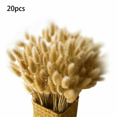 20Pcs Natural Dried Flower Branch For Farmhouse Floral Wedding Home DIY Decor JT