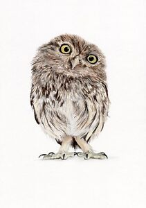 LITTLE OWL Nursery art drawing prints 2 sizes A4//A3 or Note greetings Card