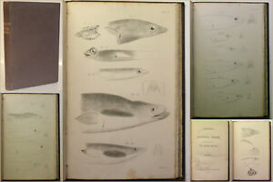 Kaup-Catalogue-of-Apodal-Fish-1856-Ichthyologie-Fische-Fischkunde-Zoologie-xy