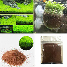 Fish Tank Aquarium Plant Seeds Aquatic Water Grass