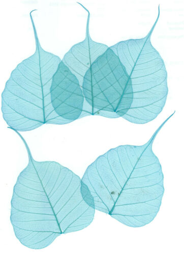 Art//Srapbook//Toppers//Cardmaking etc 30 X Turquoise Banyan Tree Skeleton Leaves