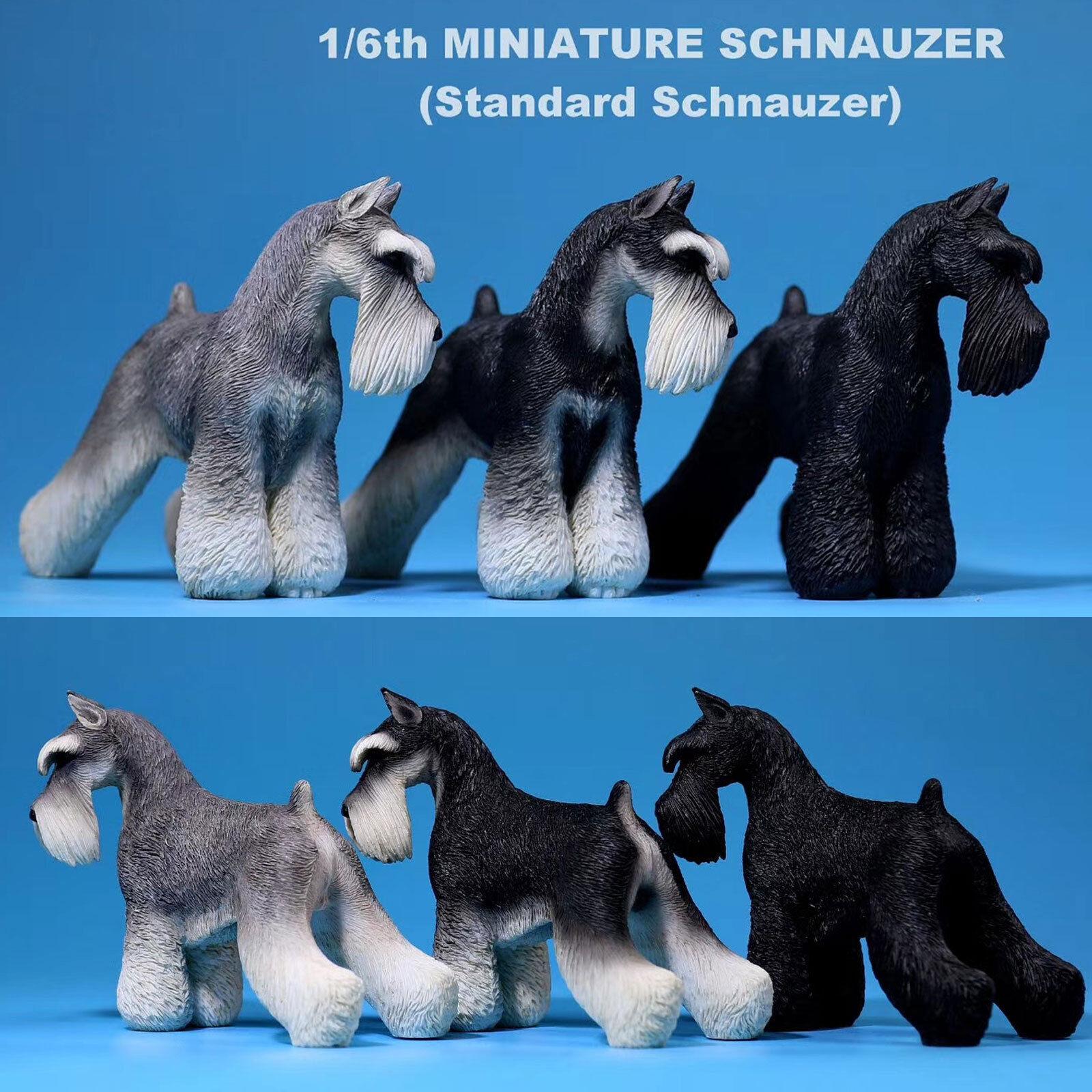 1 6 Scale Mr.Z Animal Toys Miniature Schnauzer Dogs Resin Figure 3 color Model
