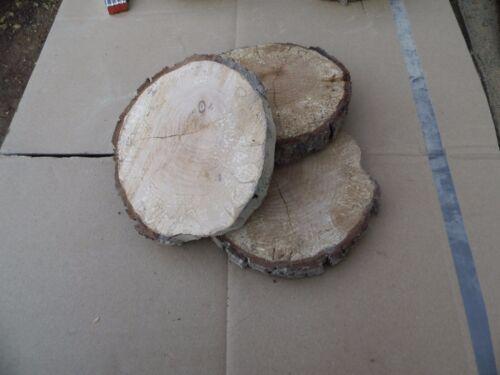 10 Baumscheiben teilweise ohne Rinde Holzscheibe Eiche 15 x 2 cm